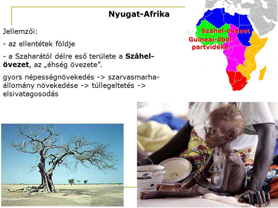"""Nyugat-Afrika Jellemzői: - az ellentétek földje - a Szaharától délre eső területe a Száhel- övezet, az """"éhség övezete"""". gyors népességnövekedés -> sza"""