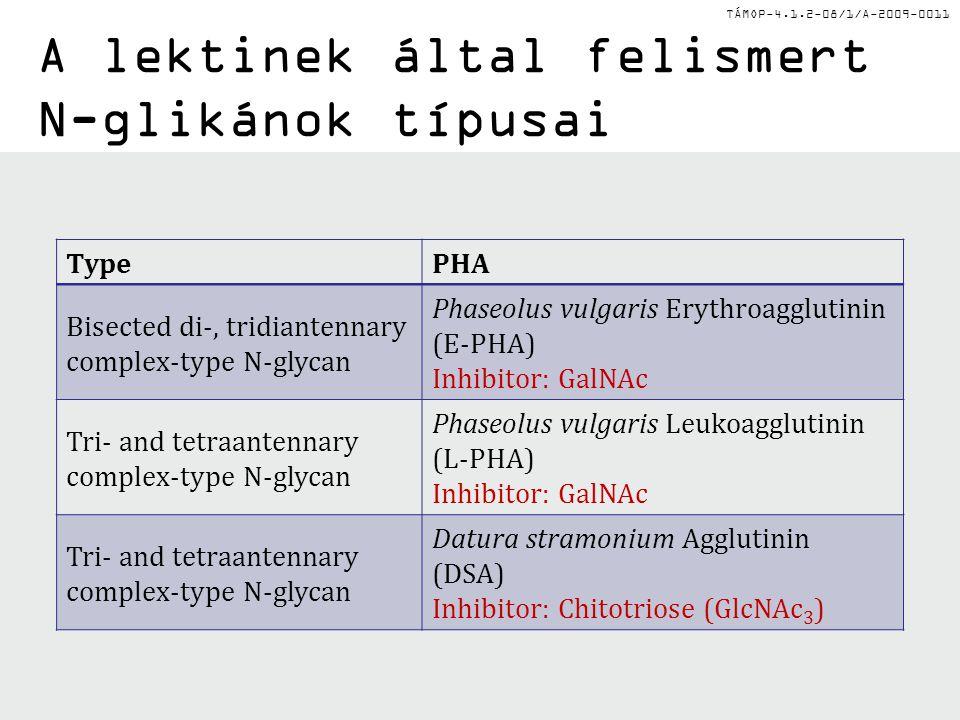 TÁMOP-4.1.2-08/1/A-2009-0011 A lektinek által felismert N-glikánok típusai TypePHA Bisected di-, tridiantennary complex-type N-glycan Phaseolus vulgaris Erythroagglutinin (E-PHA) Inhibitor: GalNAc Tri- and tetraantennary complex-type N-glycan Phaseolus vulgaris Leukoagglutinin (L-PHA) Inhibitor: GalNAc Tri- and tetraantennary complex-type N-glycan Datura stramonium Agglutinin (DSA) Inhibitor: Chitotriose (GlcNAc 3 )