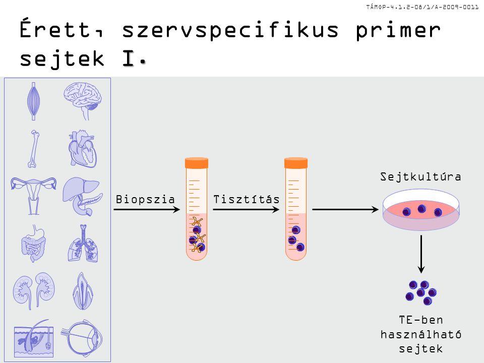 TÁMOP-4.1.2-08/1/A-2009-0011 I. Érett, szervspecifikus primer sejtek I. BiopsziaTisztítás Sejtkultúra TE-ben használható sejtek
