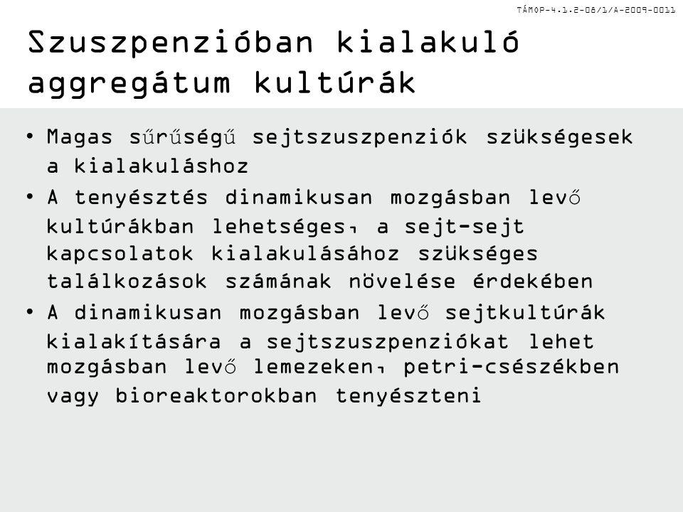 TÁMOP-4.1.2-08/1/A-2009-0011 Szuszpenzióban kialakuló aggregátum kultúrák Magas sűrűségű sejtszuszpenziók szükségesek a kialakuláshoz A tenyésztés din