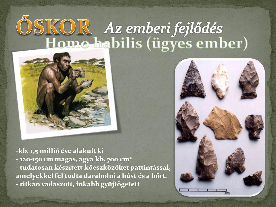 -kb. 1,5 millió éve alakult ki - 120-150 cm magas, agya kb. 700 cm 2 - tudatosan készített kőeszközöket pattintással, amelyekkel fel tudta darabolni a