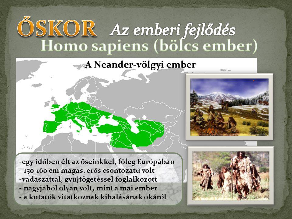 A Neander-völgyi ember -egy időben élt az őseinkkel, főleg Európában - 150-160 cm magas, erős csontozatú volt -vadászattal, gyűjtögetéssel foglalkozot