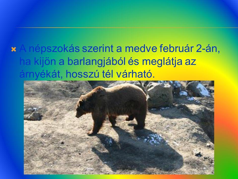  A medvék cirkuszban is sokszor szórakoztatják a közönséget.