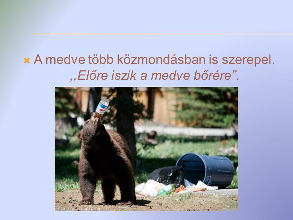 A medve közkedvelt reklámfigura.