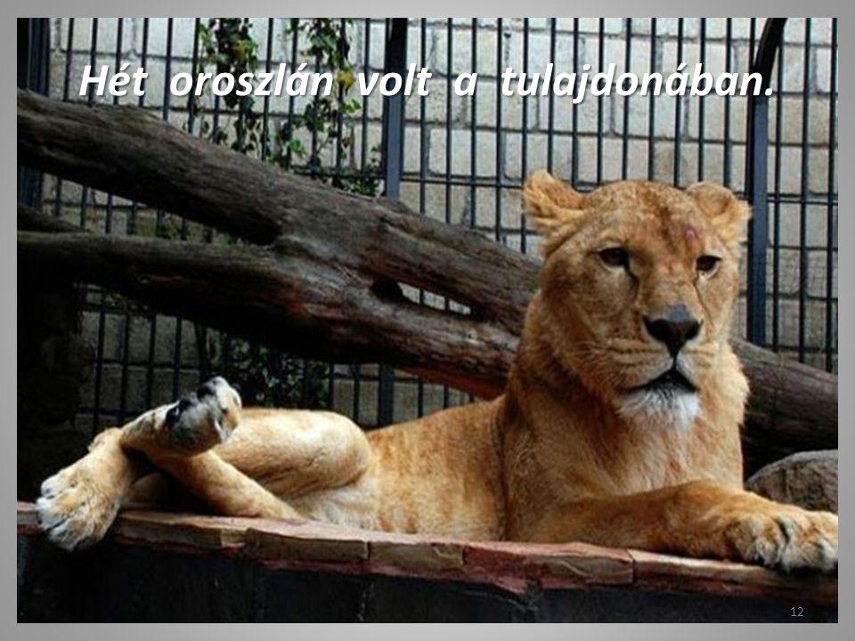 Egzotikus állatkollekció… 11