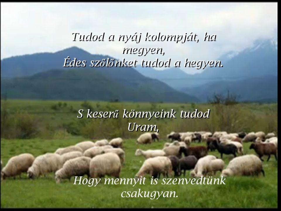 Tudod a nyáj kolompját, ha megyen, Édes sz ő l ő nket tudod a hegyen.