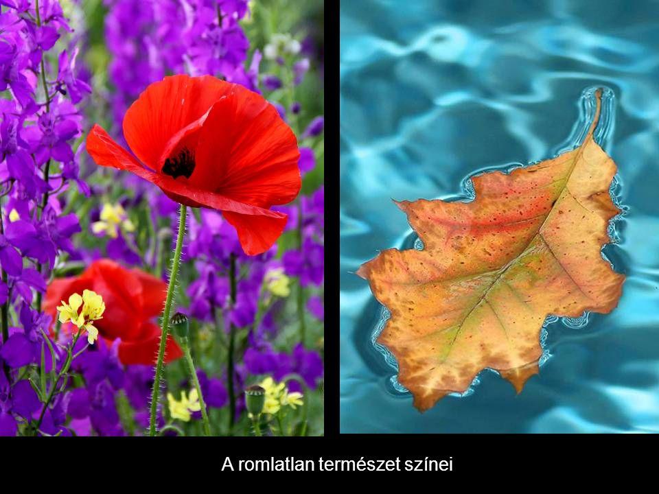 A romlatlan természet színei