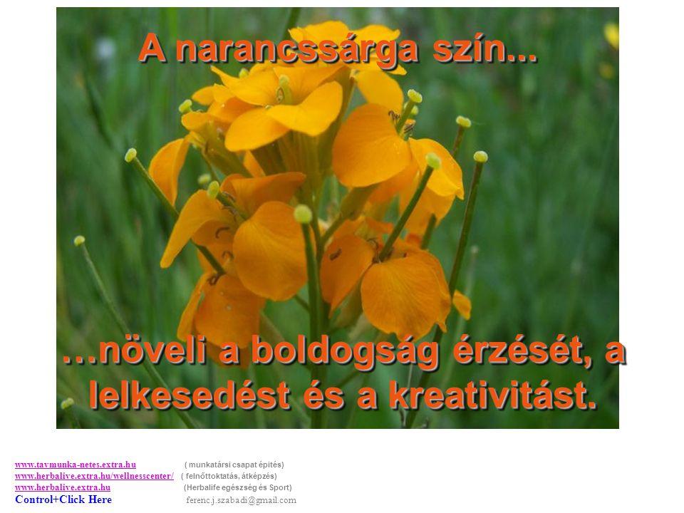 A narancssárga szín...…növeli a boldogság érzését, a lelkesedést és a kreativitást.