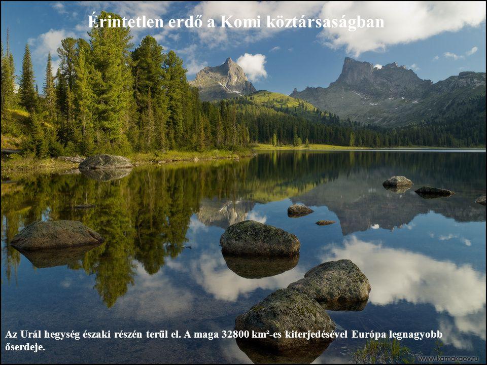 Érintetlen erdő a Komi köztársaságban Az Urál hegység északi részén terül el.