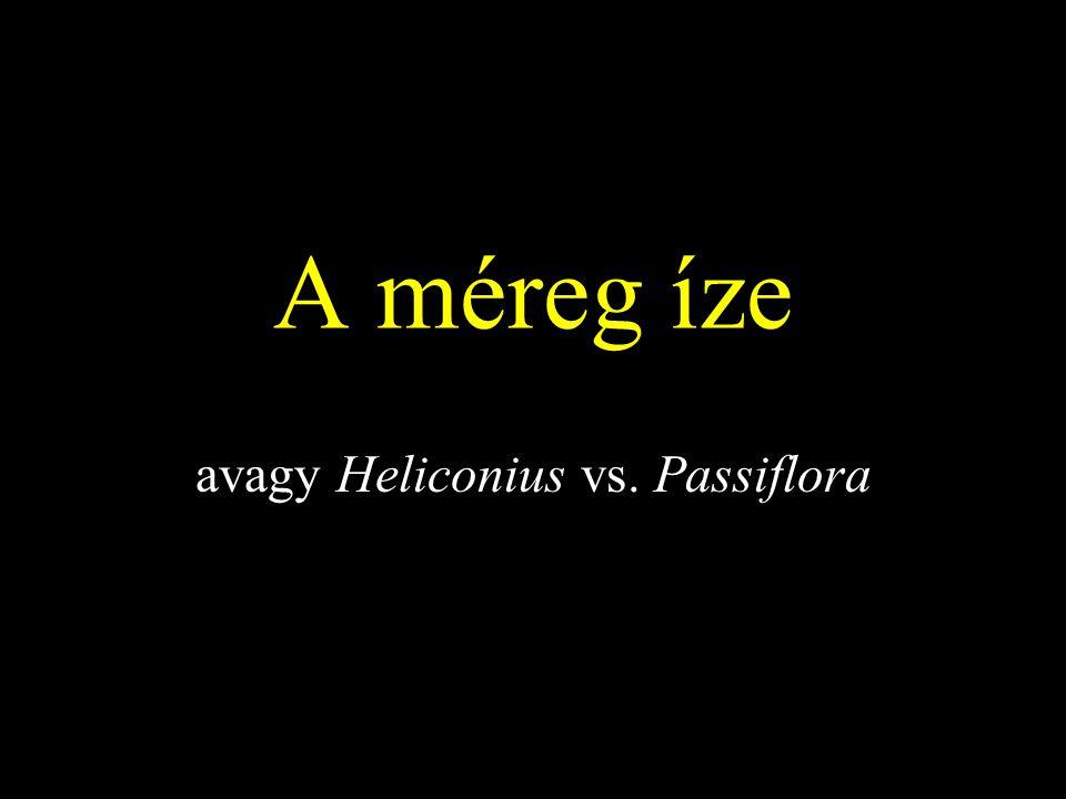 A méreg íze avagy Heliconius vs. Passiflora
