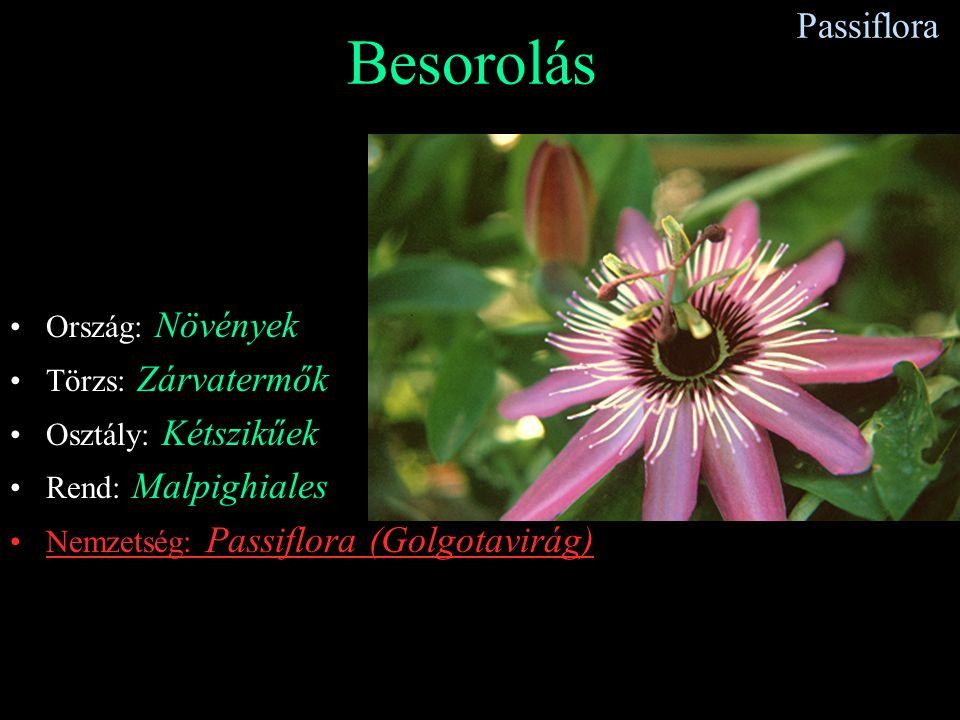 Passiflora Besorolás Ország: Növények Törzs: Zárvatermők Osztály: Kétszikűek Rend: Malpighiales Nemzetség: Passiflora (Golgotavirág)