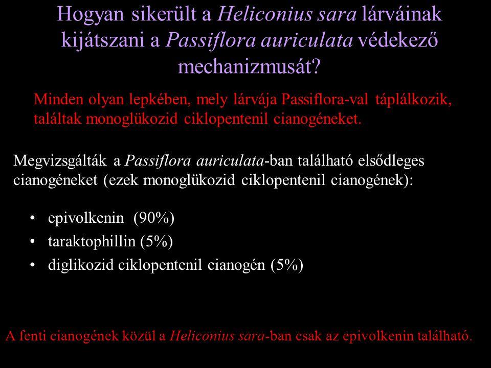 Hogyan sikerült a Heliconius sara lárváinak kijátszani a Passiflora auriculata védekező mechanizmusát? Minden olyan lepkében, mely lárvája Passiflora-
