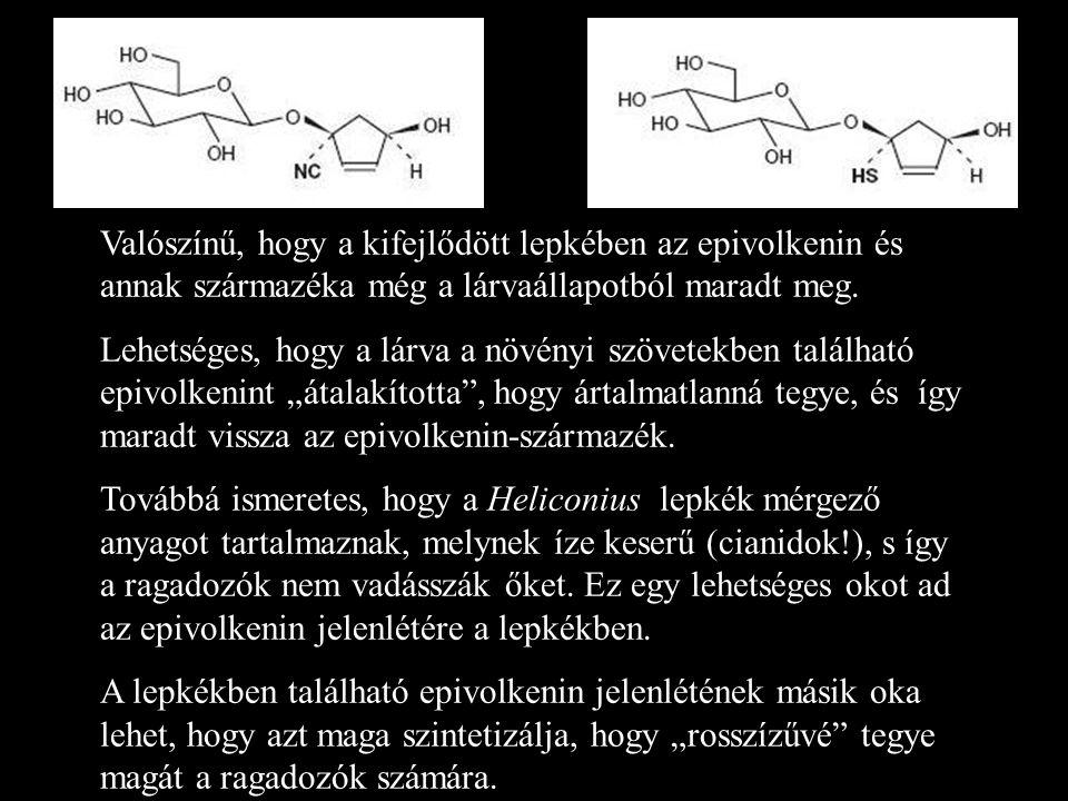 Valószínű, hogy a kifejlődött lepkében az epivolkenin és annak származéka még a lárvaállapotból maradt meg. Lehetséges, hogy a lárva a növényi szövete