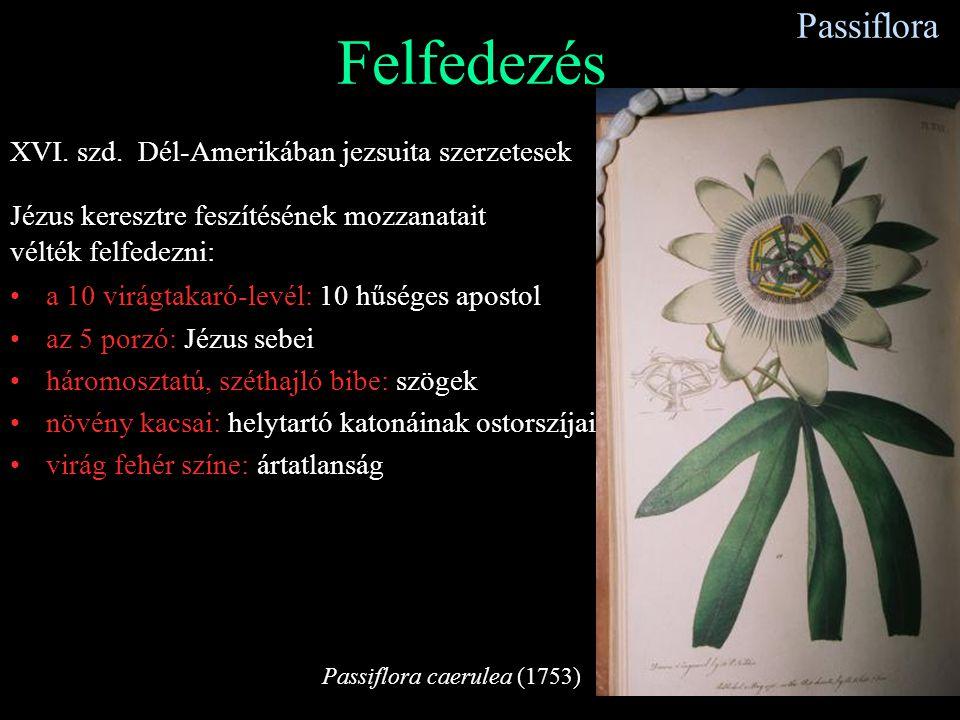 Passiflora Felfedezés XVI. szd. Dél-Amerikában jezsuita szerzetesek Jézus keresztre feszítésének mozzanatait vélték felfedezni: a 10 virágtakaró-levél