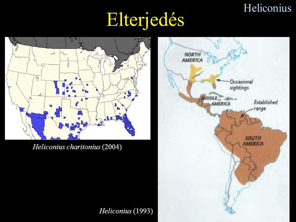 Heliconius Elterjedés Heliconius charitonius (2004) Heliconius (1993)