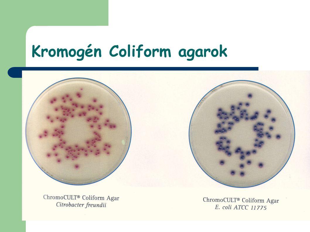 Kromogén Coliform agarok