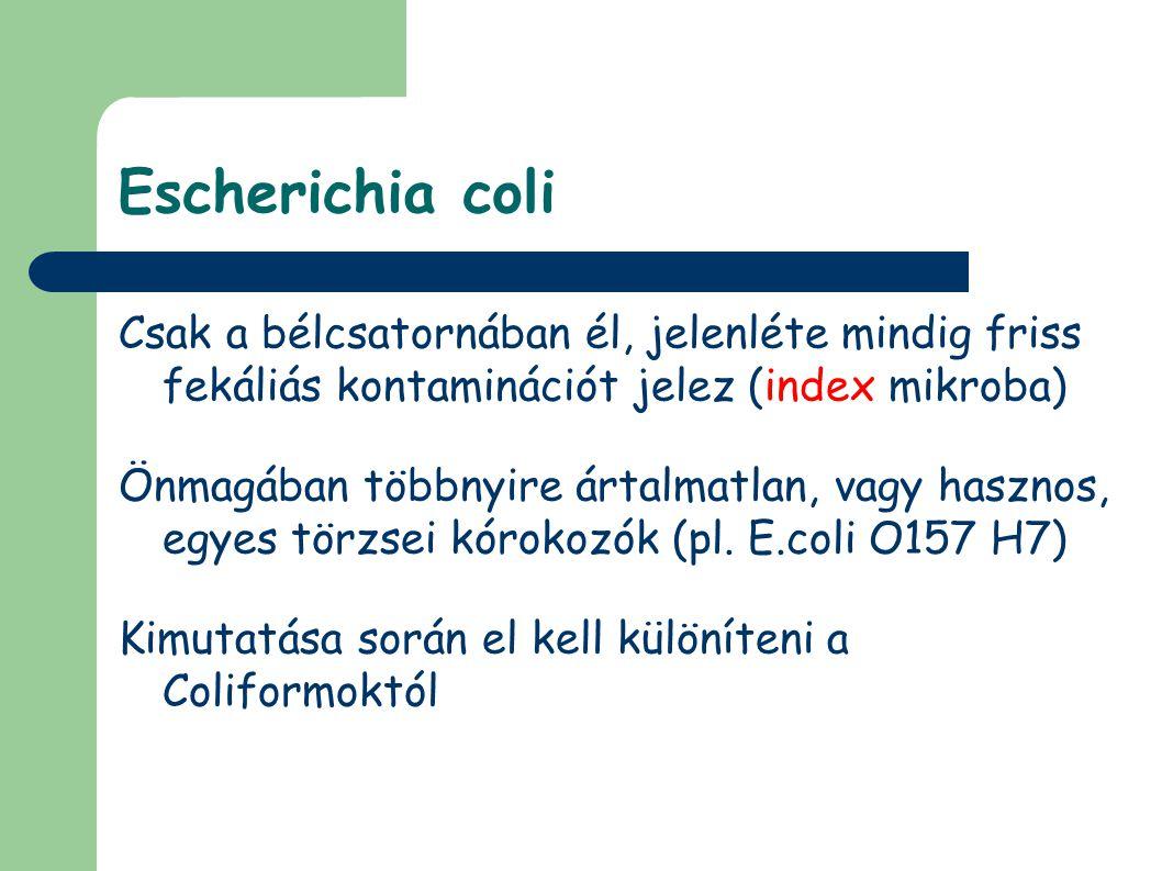 Escherichia coli Csak a bélcsatornában él, jelenléte mindig friss fekáliás kontaminációt jelez (index mikroba) Önmagában többnyire ártalmatlan, vagy hasznos, egyes törzsei kórokozók (pl.