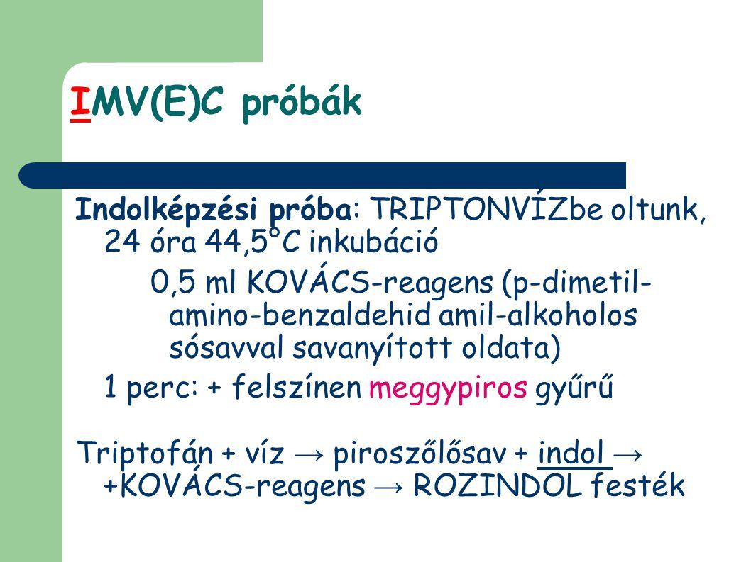 IMV(E)C próbák Indolképzési próba: TRIPTONVÍZbe oltunk, 24 óra 44,5°C inkubáció 0,5 ml KOVÁCS-reagens (p-dimetil- amino-benzaldehid amil-alkoholos sósavval savanyított oldata) 1 perc: + felszínen meggypiros gyűrű Triptofán + víz → piroszőlősav + indol → +KOVÁCS-reagens → ROZINDOL festék