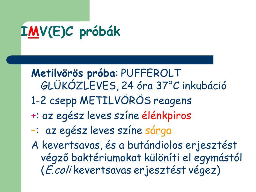 IMV(E)C próbák Metilvörös próba: PUFFEROLT GLÜKÓZLEVES, 24 óra 37°C inkubáció 1-2 csepp METILVÖRÖS reagens +: az egész leves színe élénkpiros –: az egész leves színe sárga A kevertsavas, és a butándiolos erjesztést végző baktériumokat különíti el egymástól (E.coli kevertsavas erjesztést végez)