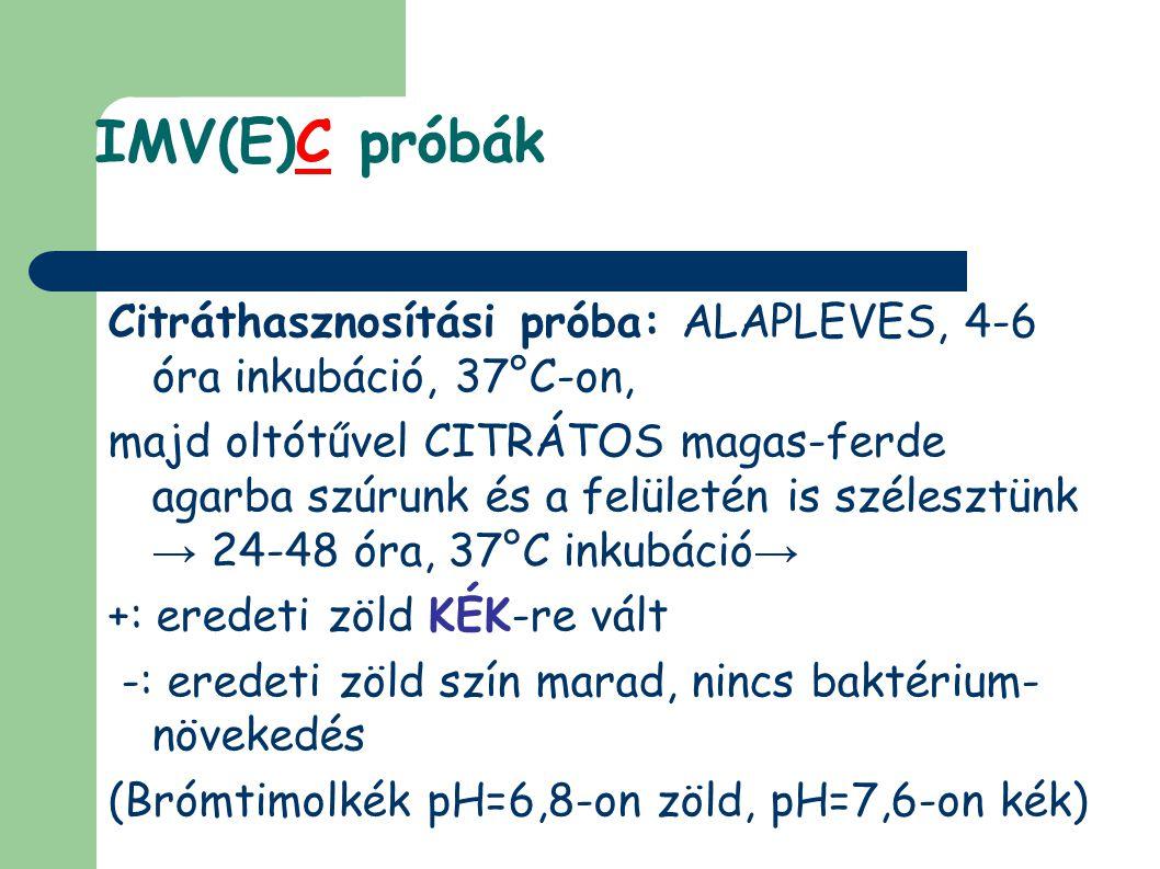 IMV(E)C próbák Citráthasznosítási próba: ALAPLEVES, 4-6 óra inkubáció, 37°C-on, majd oltótűvel CITRÁTOS magas-ferde agarba szúrunk és a felületén is szélesztünk → 24-48 óra, 37°C inkubáció → +: eredeti zöld KÉK-re vált -: eredeti zöld szín marad, nincs baktérium- növekedés (Brómtimolkék pH=6,8-on zöld, pH=7,6-on kék)