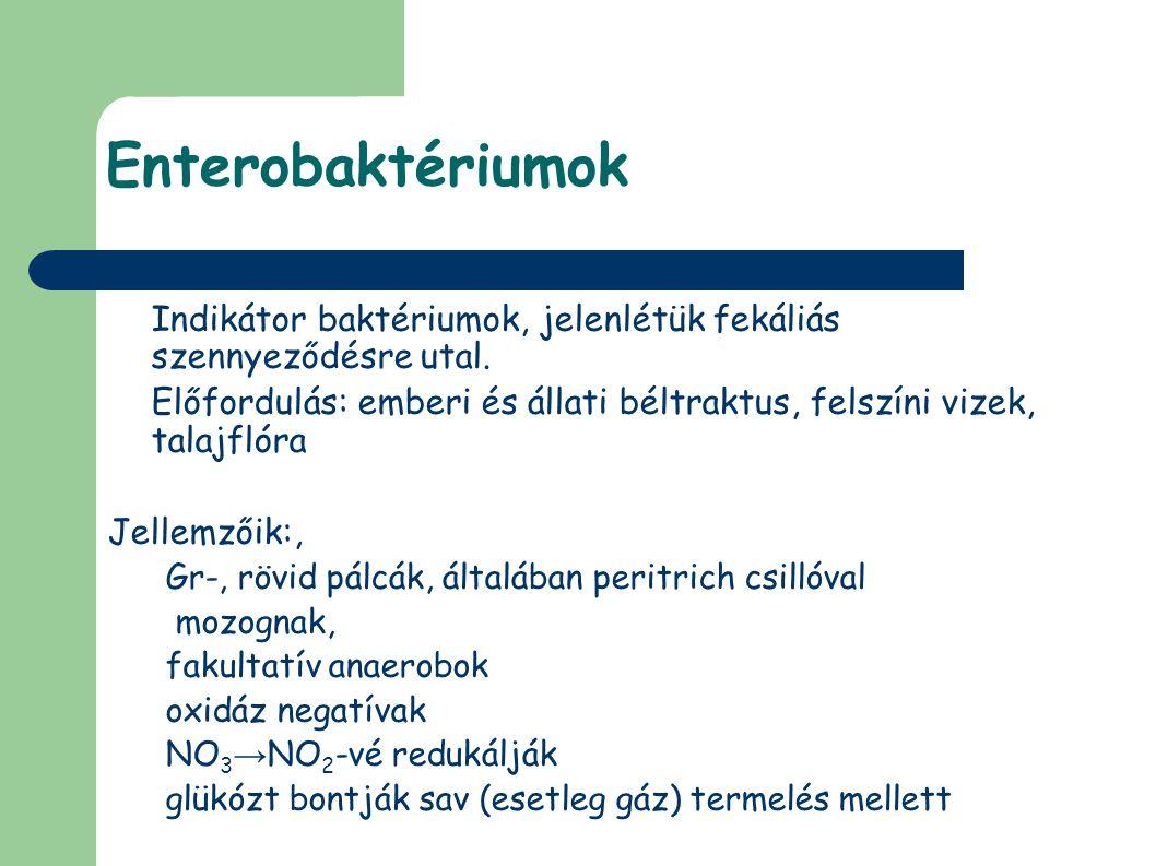 Enterobaktériumok Indikátor baktériumok, jelenlétük fekáliás szennyeződésre utal. Előfordulás: emberi és állati béltraktus, felszíni vizek, talajflóra