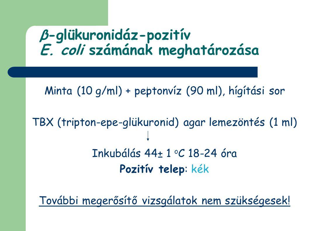 β-glükuronidáz-pozitív E. coli számának meghatározása Minta (10 g/ml) + peptonvíz (90 ml), hígítási sor TBX (tripton-epe-glükuronid) agar lemezöntés (