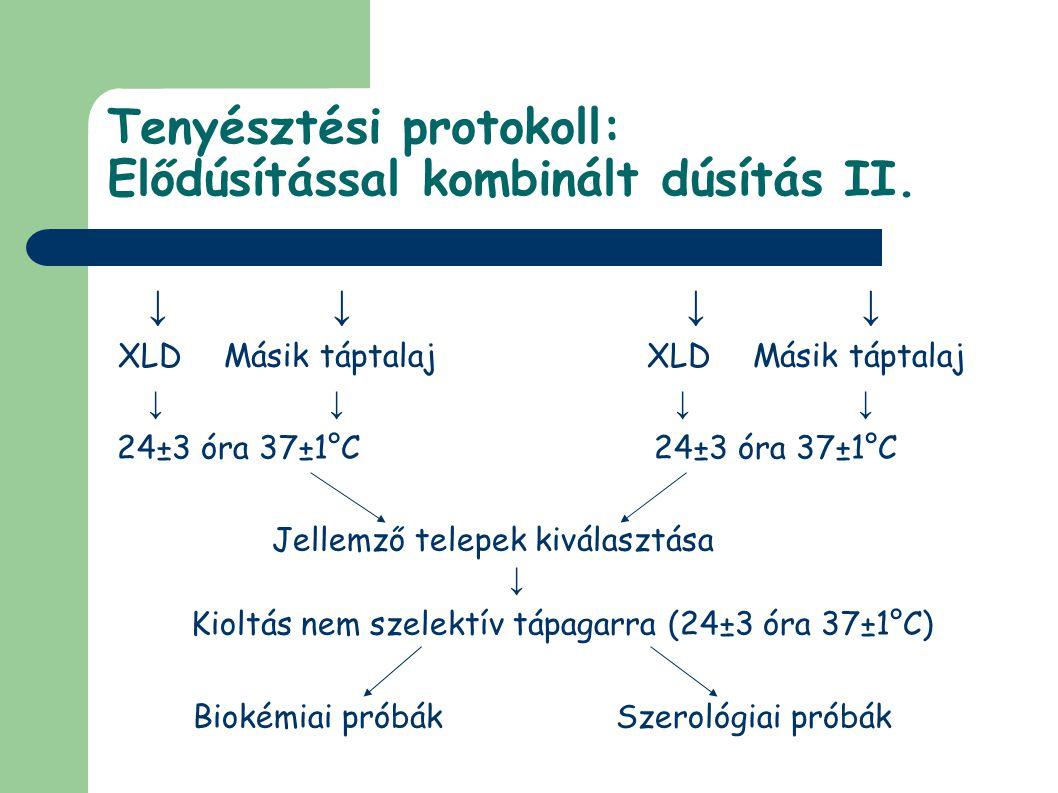 Tenyésztési protokoll: Elődúsítással kombinált dúsítás II. ↓ ↓ XLDMásik táptalajXLDMásik táptalaj ↓ ↓ 24±3 óra 37±1°C 24±3 óra 37±1°C Jellemző telepek
