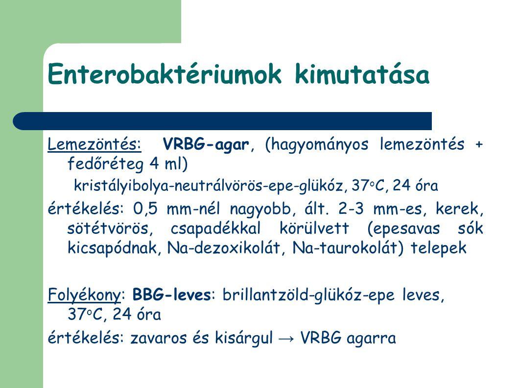 Enterobaktériumok kimutatása Lemezöntés: VRBG-agar, (hagyományos lemezöntés + fedőréteg 4 ml) kristályibolya-neutrálvörös-epe-glükóz, 37 o C, 24 óra é