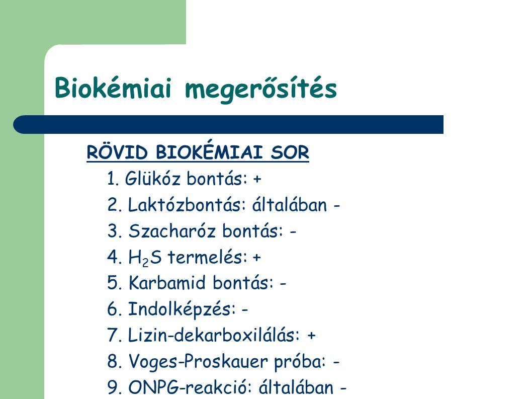Biokémiai megerősítés RÖVID BIOKÉMIAI SOR 1. Glükóz bontás: + 2. Laktózbontás: általában - 3. Szacharóz bontás: - 4. H 2 S termelés: + 5. Karbamid bon