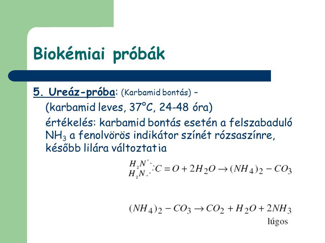 Biokémiai próbák 5.