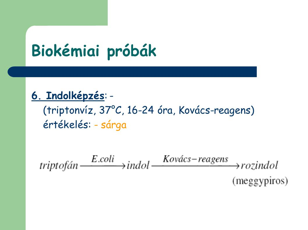 Biokémiai próbák 6. Indolképzés: - (triptonvíz, 37°C, 16-24 óra, Kovács-reagens) értékelés: - sárga