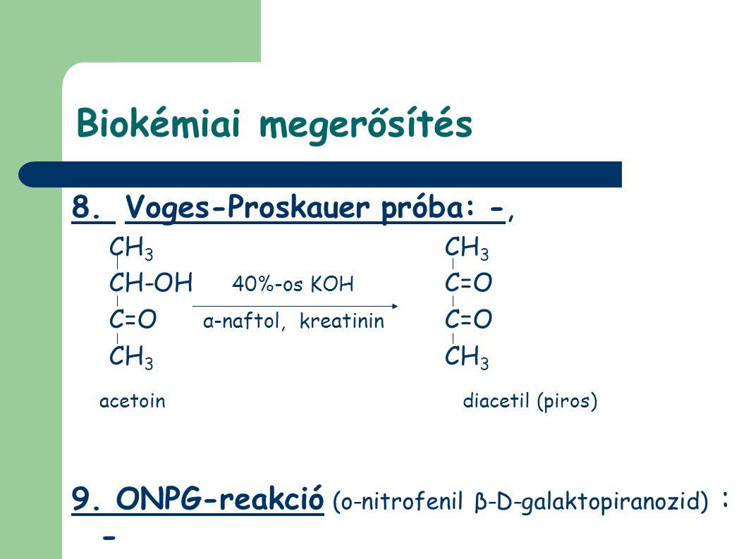 Biokémiai megerősítés 8. Voges-Proskauer próba: -, CH 3 CH-OH 40%-os KOH C=O C=O α-naftol, kreatinin C=O CH 3 acetoin diacetil (piros) 9. ONPG-reakció