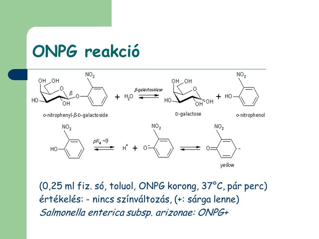 ONPG reakció (0,25 ml fiz. só, toluol, ONPG korong, 37°C, pár perc) értékelés: - nincs színváltozás, (+: sárga lenne) Salmonella enterica subsp. arizo