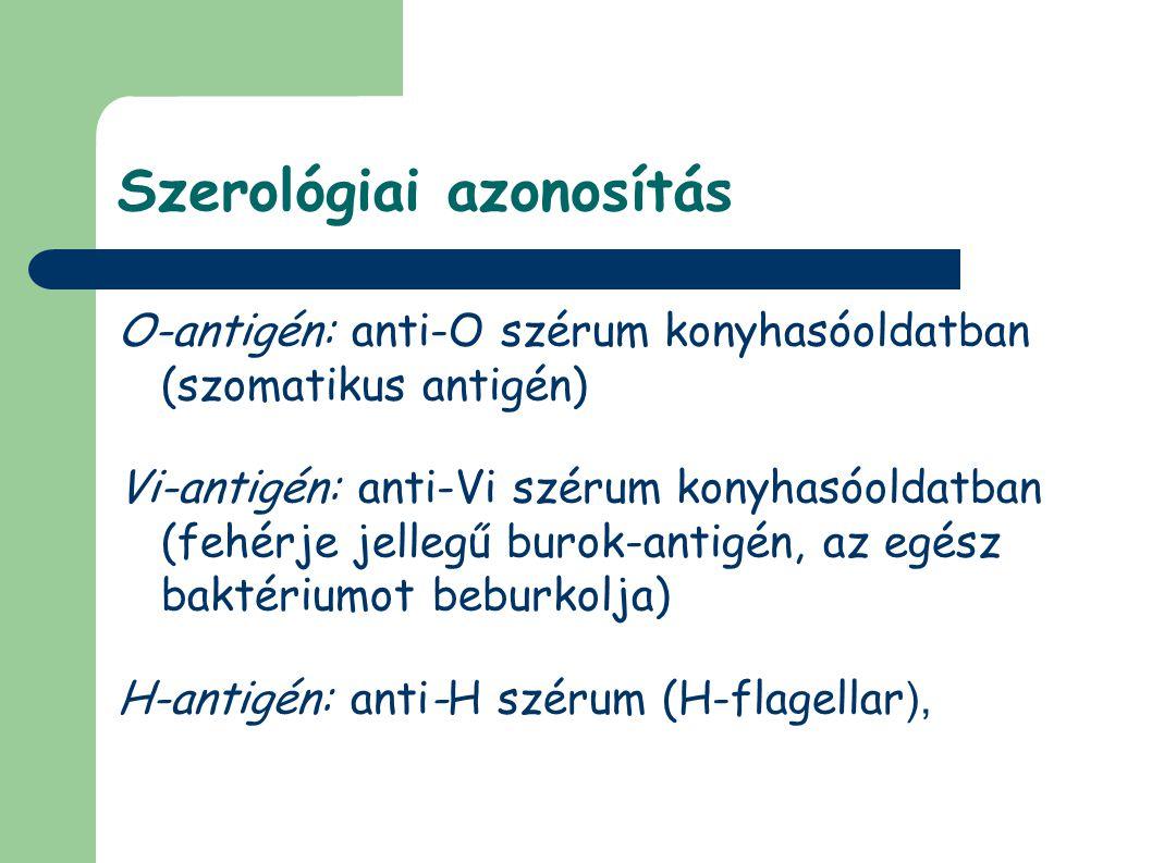 Szerológiai azonosítás O-antigén: anti-O szérum konyhasóoldatban (szomatikus antigén) Vi-antigén: anti-Vi szérum konyhasóoldatban (fehérje jellegű burok-antigén, az egész baktériumot beburkolja) H-antigén: anti-H szérum (H-flagellar ),