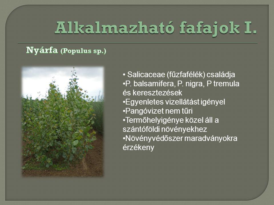 Salicaceae (fűzfafélék) családja P. balsamifera, P. nigra, P tremula és keresztezések Egyenletes vizellátást igényel Pangóvizet nem tűri Termőhelyigén