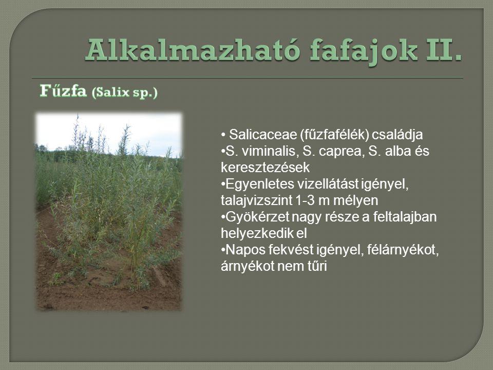 Salicaceae (fűzfafélék) családja S. viminalis, S. caprea, S. alba és keresztezések Egyenletes vizellátást igényel, talajvizszint 1-3 m mélyen Gyökérze