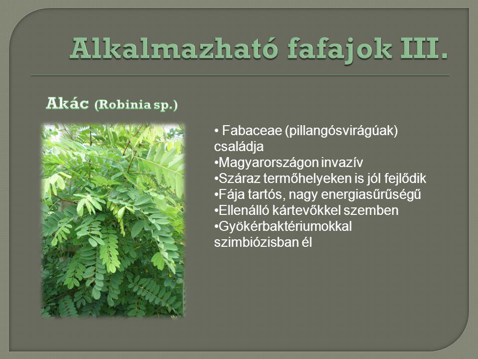 Fabaceae (pillangósvirágúak) családja Magyarországon invazív Száraz termőhelyeken is jól fejlődik Fája tartós, nagy energiasűrűségű Ellenálló kártevők