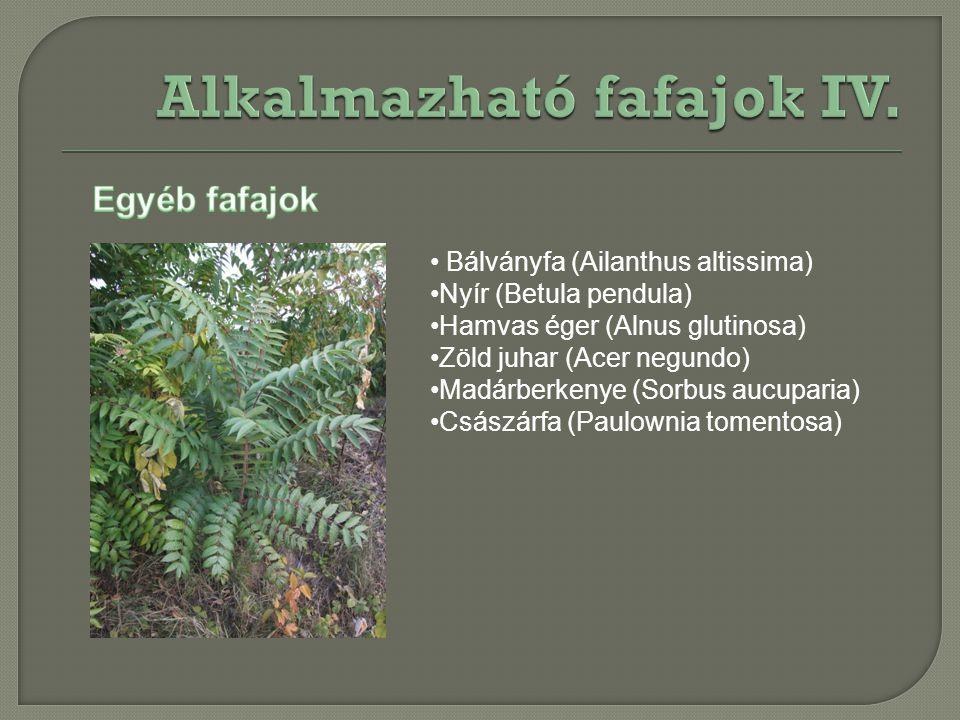 Bálványfa (Ailanthus altissima) Nyír (Betula pendula) Hamvas éger (Alnus glutinosa) Zöld juhar (Acer negundo) Madárberkenye (Sorbus aucuparia) Császár