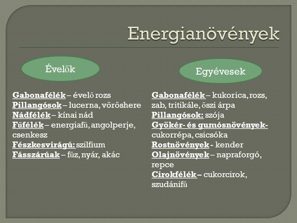 Törzsültetvény szaporítóanyag ENERGIAÜLTETVÉNY 1.betakarítás (2.év) 2-5.
