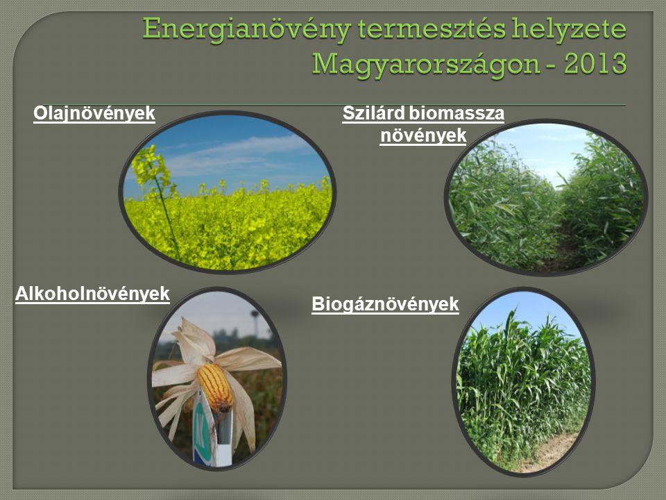 Olajnövények Alkoholnövények Szilárd biomassza növények Biogáznövények