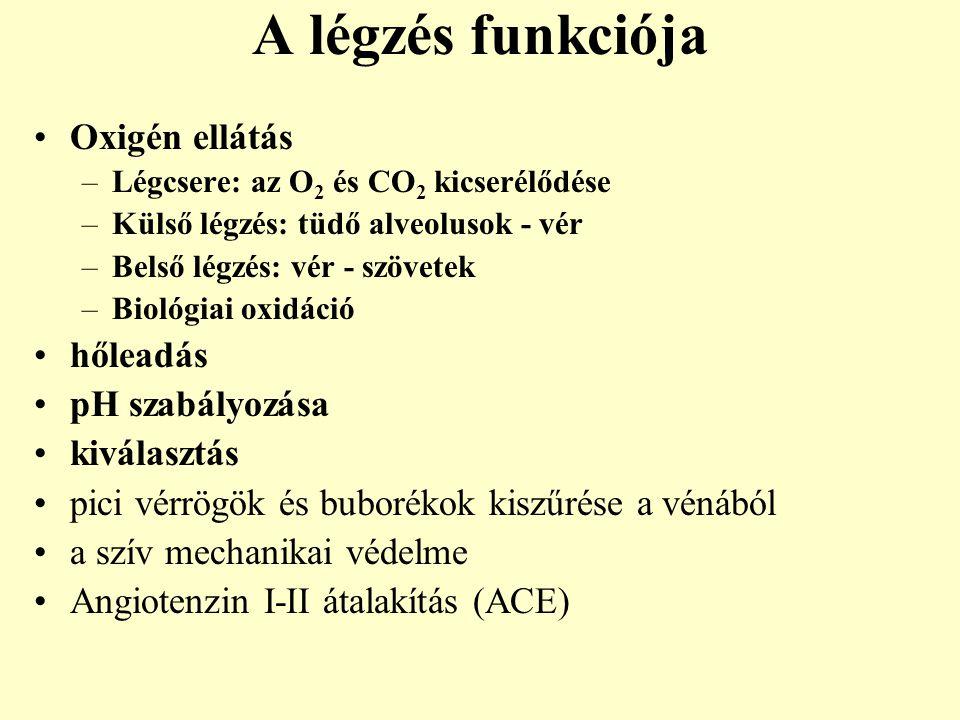A légzés funkciója Oxigén ellátás –Légcsere: az O 2 és CO 2 kicserélődése –Külső légzés: tüdő alveolusok - vér –Belső légzés: vér - szövetek –Biológia