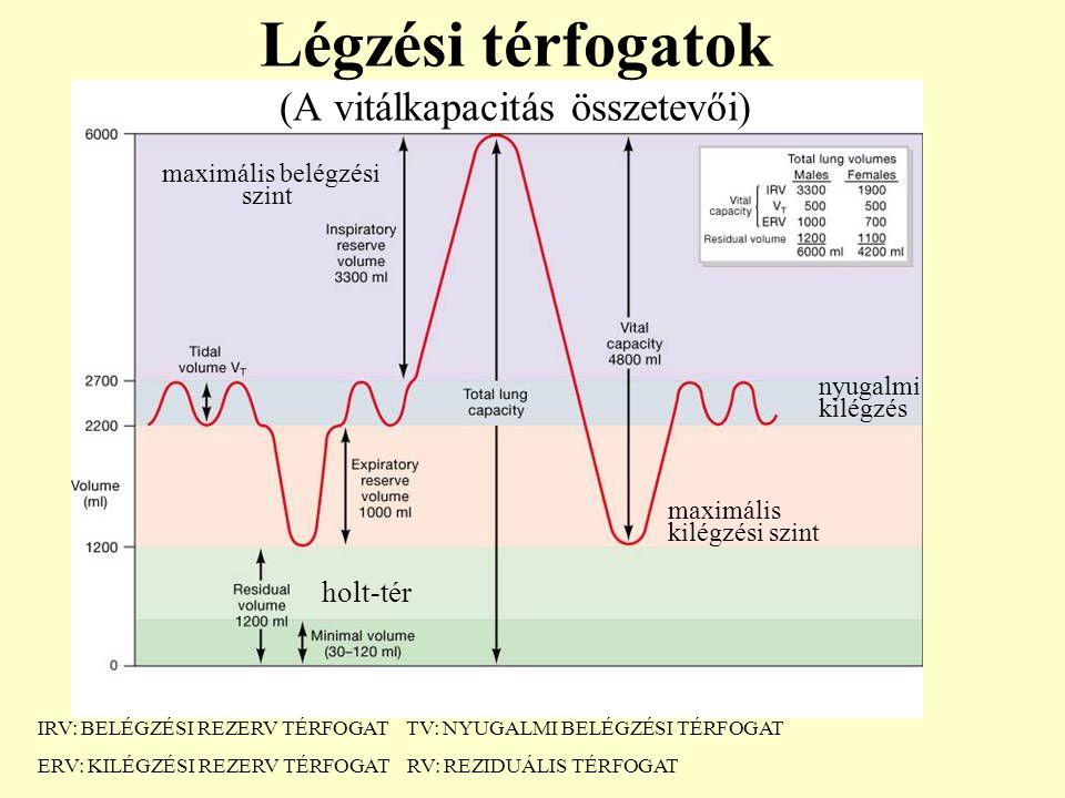 Légzési térfogatok (A vitálkapacitás összetevői) holt-tér maximális belégzési szint nyugalmi kilégzés maximális kilégzési szint IRV: BELÉGZÉSI REZERV