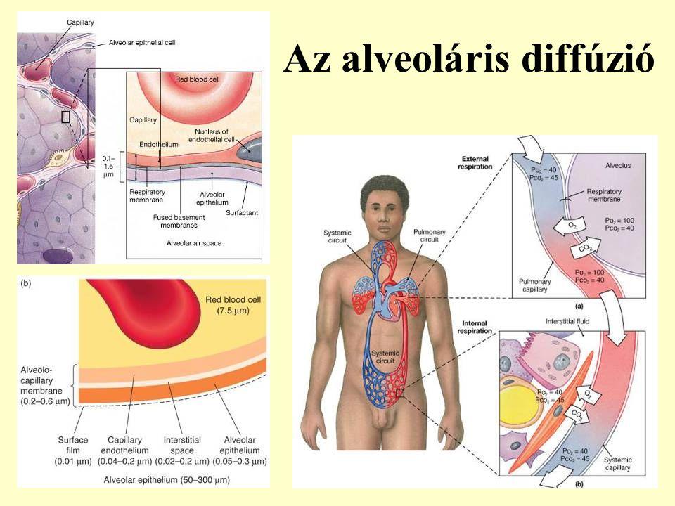 Az alveoláris diffúzió