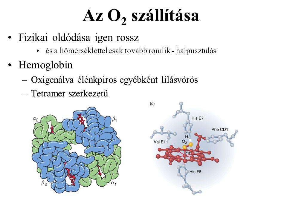 Az O 2 szállítása Fizikai oldódása igen rossz és a hőmérséklettel csak tovább romlik - halpusztulás Hemoglobin –Oxigenálva élénkpiros egyébként lilásv