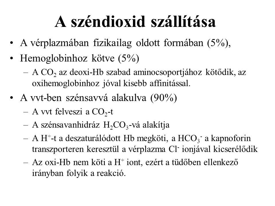A széndioxid szállítása A vérplazmában fizikailag oldott formában (5%), Hemoglobinhoz kötve (5%) –A CO 2 az deoxi-Hb szabad aminocsoportjához kötődik,