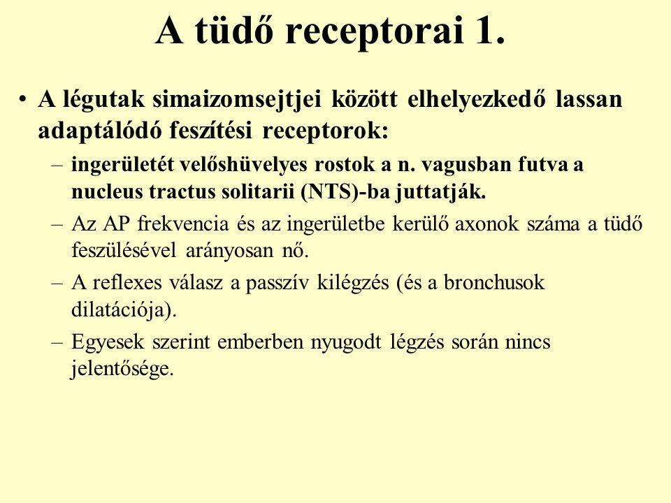 A tüdő receptorai 1. A légutak simaizomsejtjei között elhelyezkedő lassan adaptálódó feszítési receptorok: –ingerületét velőshüvelyes rostok a n. vagu