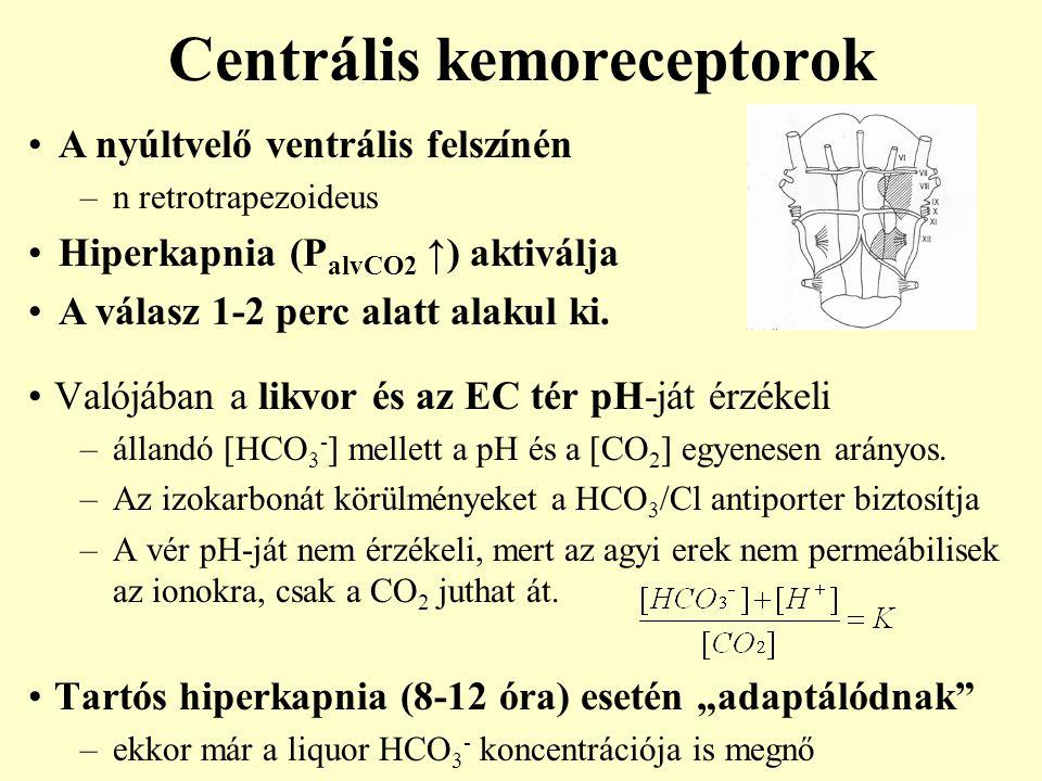 Centrális kemoreceptorok Valójában a likvor és az EC tér pH-ját érzékeli –állandó [HCO 3 - ] mellett a pH és a [CO 2 ] egyenesen arányos. –Az izokarbo