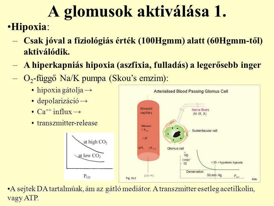 Hipoxia: –Csak jóval a fiziológiás érték (100Hgmm) alatt (60Hgmm-től) aktiválódik. –A hiperkapniás hipoxia (aszfixia, fulladás) a legerősebb inger –O