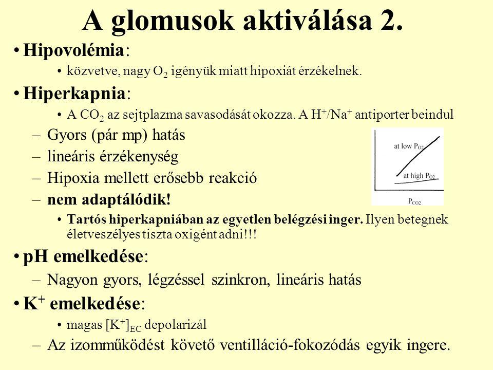 A glomusok aktiválása 2. Hipovolémia: közvetve, nagy O 2 igényük miatt hipoxiát érzékelnek. Hiperkapnia: A CO 2 az sejtplazma savasodását okozza. A H