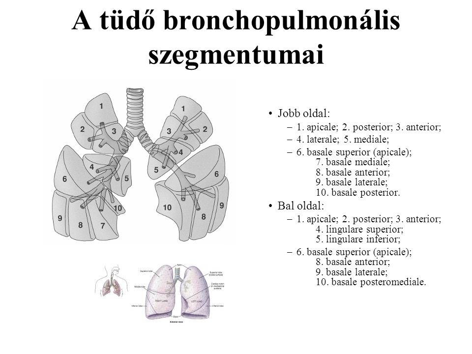 A tüdő bronchopulmonális szegmentumai Jobb oldal: –1. apicale; 2. posterior; 3. anterior; –4. laterale; 5. mediale; –6. basale superior (apicale); 7.